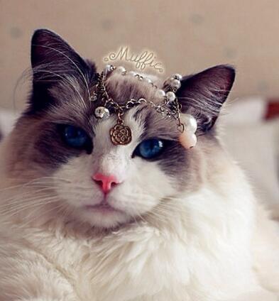 布偶猫剪指甲的方法有哪些?剪指甲前要做什么准备工作?